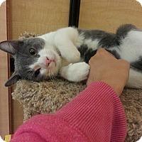 Adopt A Pet :: Walnut - West Dundee, IL