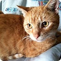 Adopt A Pet :: Dandy Lion - Brooklyn, NY