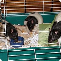 Adopt A Pet :: Jay, Ai, Uno - Greenwood, MI
