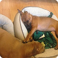 Adopt A Pet :: Mackenzie - East Rockaway, NY