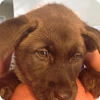 Adopt A Pet :: Storm - Marlton, NJ