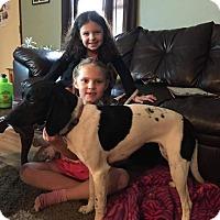 Adopt A Pet :: Oreo 3 - ROME, NY