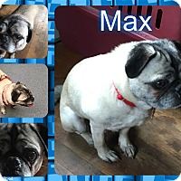 Adopt A Pet :: Max - Walled Lake, MI