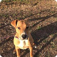 Adopt A Pet :: Otis - McCurtain, OK