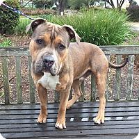 Adopt A Pet :: Tri-Tip - Mission Viejo, CA