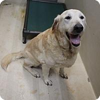 Adopt A Pet :: A17 Bam - Odessa, TX