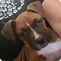 Adopt A Pet :: Tonka - Alameda, CA