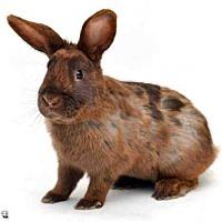 Adopt A Pet :: TORTUGA - San Francisco, CA