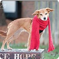 Adopt A Pet :: Penny - Dublin, OH