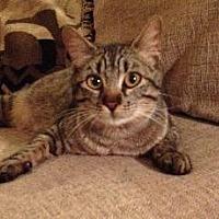 Adopt A Pet :: Gypsy - Richardson, TX