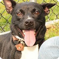 Adopt A Pet :: Plum - Media, PA