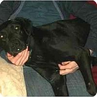 Adopt A Pet :: Selena - Seattle, WA