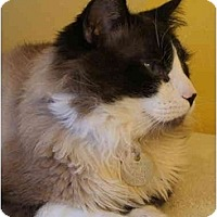 Adopt A Pet :: Tompall - Keizer, OR