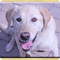 Adopt A Pet :: Karma - Scottsdale, AZ
