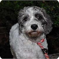 Adopt A Pet :: Juliette - New York, NY