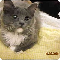 Adopt A Pet :: Muffy - Riverside, RI