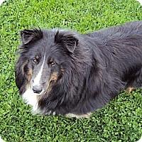 Adopt A Pet :: Bella - Abingdon, MD