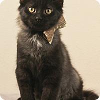Adopt A Pet :: Gabriel - Kerrville, TX