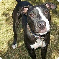 Adopt A Pet :: Eros - El Campo, TX