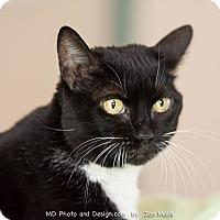 Adopt A Pet :: Scarlett - Fountain Hills, AZ