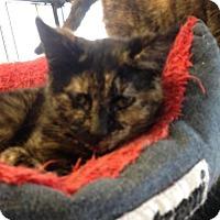 Adopt A Pet :: Rosie - Hamilton, ON