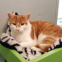 Adopt A Pet :: Twix - Barnwell, SC