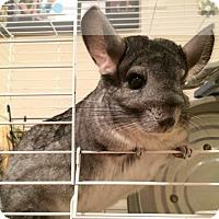 Adopt A Pet :: Frankie & Simone - Granby, CT