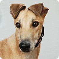 Adopt A Pet :: Elko - Ware, MA