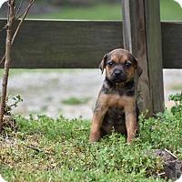 Adopt A Pet :: MEMPHIS - Groton, MA