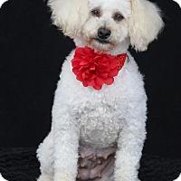 Adopt A Pet :: Sophia - SAN PEDRO, CA