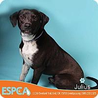 Adopt A Pet :: Julius - Enid, OK