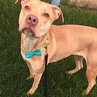 Adopt A Pet :: Queenie - Dayton, OH
