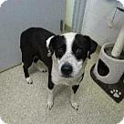 Adopt A Pet :: Rainer