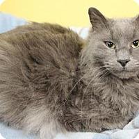 Adopt A Pet :: Max - Benbrook, TX