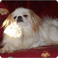 Adopt A Pet :: Niles - Emmaus, PA