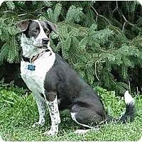 Adopt A Pet :: Chessie - Tiffin, OH