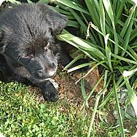 Adopt A Pet :: Milo - New Boston, NH
