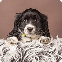 Adopt A Pet :: Jasmine - Salem, OR