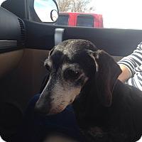 Adopt A Pet :: Molly - Byhalia, MS