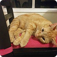 Adopt A Pet :: Germon - Gaithersburg, MD