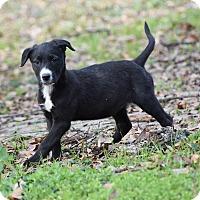 Adopt A Pet :: Danita - Groton, MA
