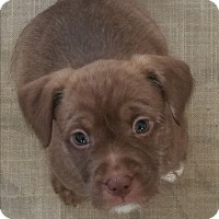 Adopt A Pet :: Daffodil - Pikeville, MD