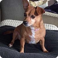Adopt A Pet :: Polly/adoption pending - Mooresville, NC