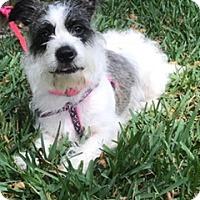 Adopt A Pet :: Blair - Davie, FL