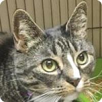 Adopt A Pet :: Misha - Medford, MA