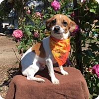Adopt A Pet :: ORLA - Elk Grove, CA