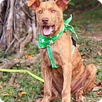 Adopt A Pet :: Jimmy - San Mateo, CA