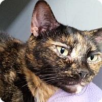 Adopt A Pet :: Luna-Beans - Sarasota, FL