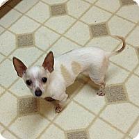 Adopt A Pet :: Poppy - Poulsob, WA