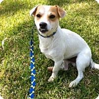 Adopt A Pet :: Mac in Houston - Houston, TX